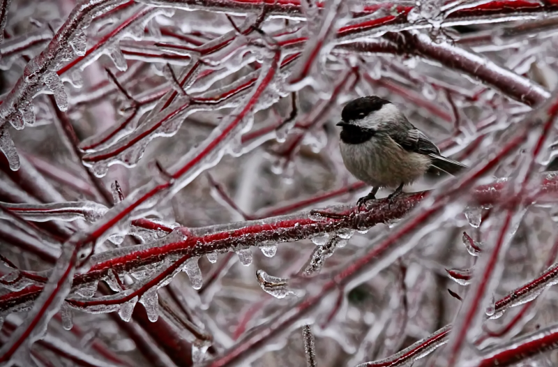 Ice Storm 14