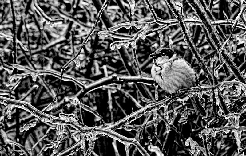 Ice Storm 16 BW