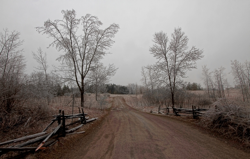 Ice Storm 24