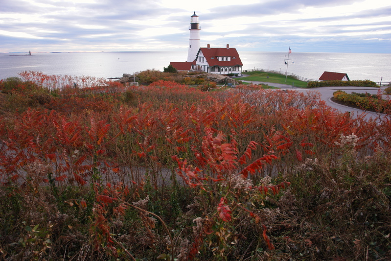 DSC07625.jpg sumac reds and portland light.. see my new favorite image! at
