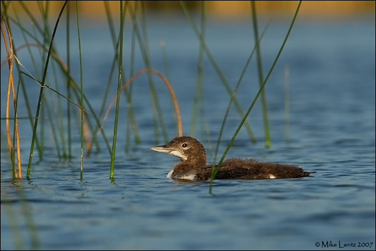 baby in reeds