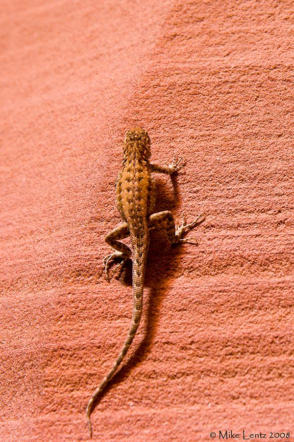 Lizard in Antelope canyon