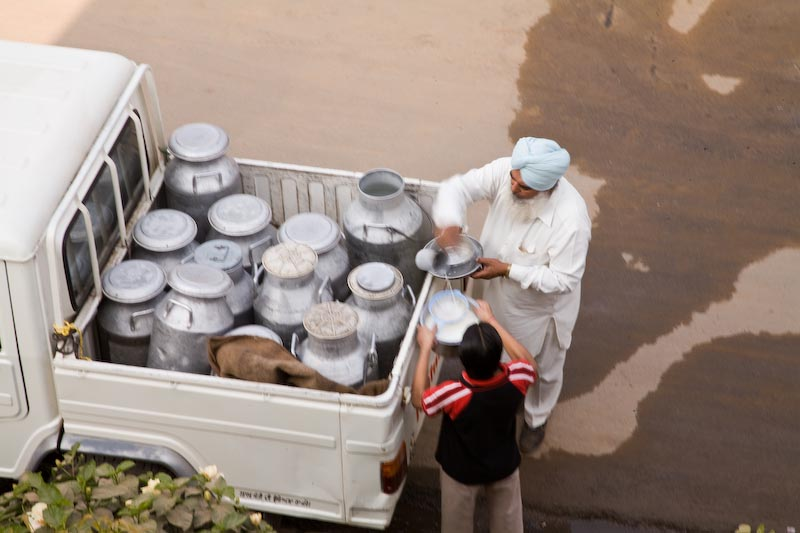 Indian milk delivery