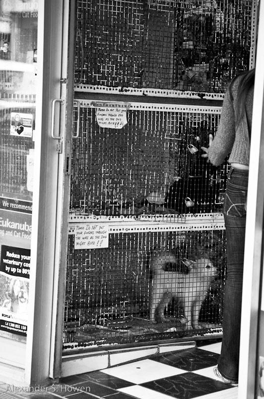 9 Feb 09 - pet shop prison