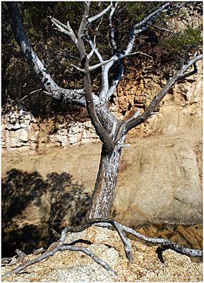 One Platja tree