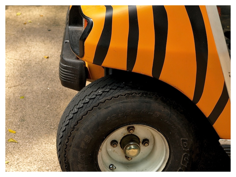 Tiger with wheels