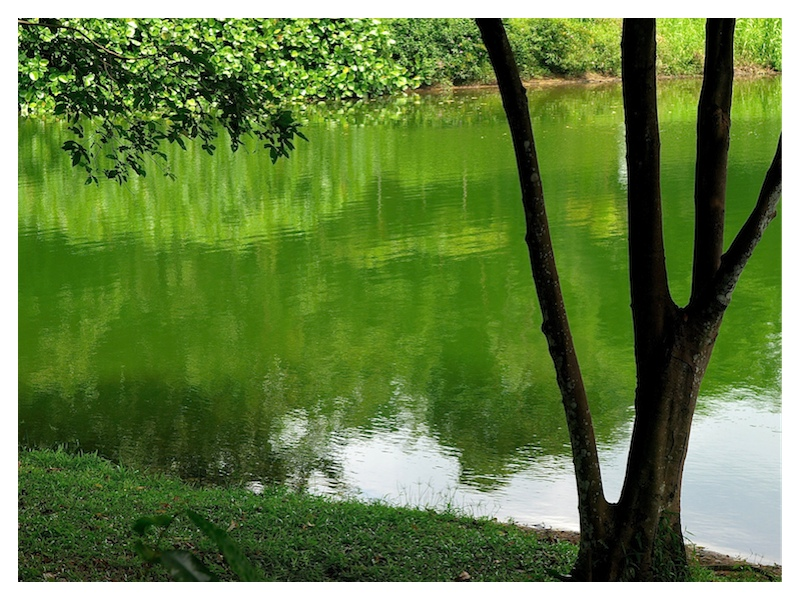 Tranquility in green