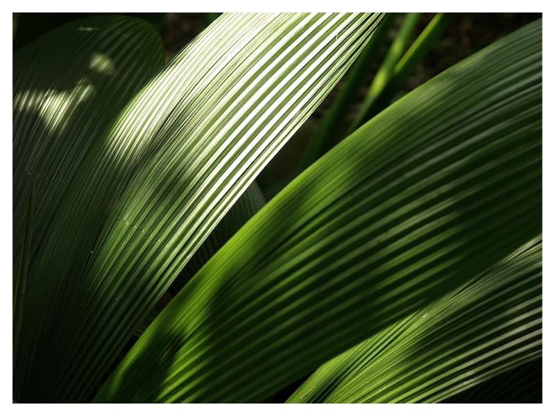 Sunlight & Leaves