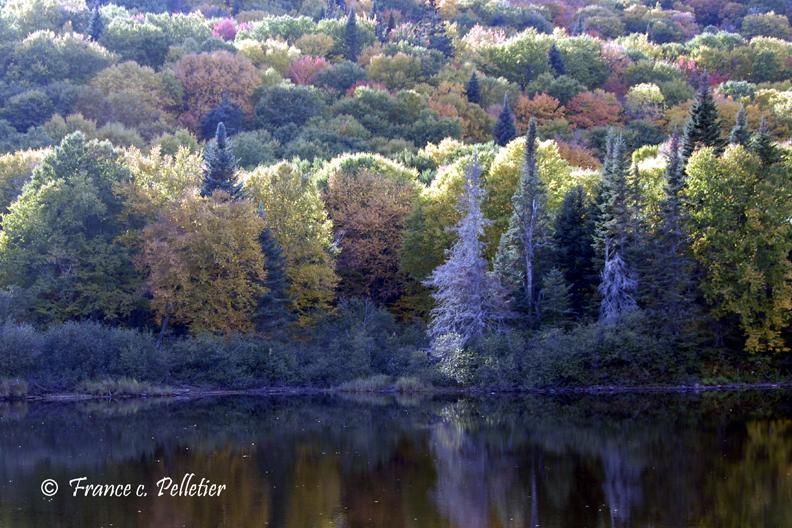 Vallée Jacques Cartier_DSC1909.jpg