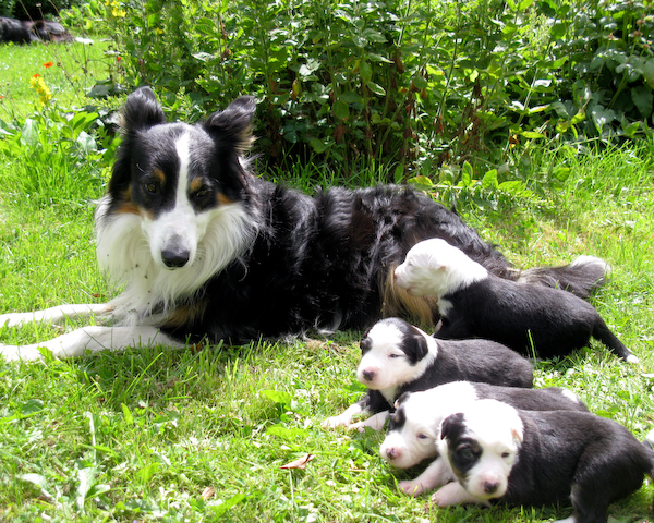 Dad and the Pups