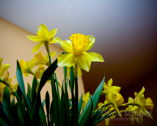Jan 24: Spring?