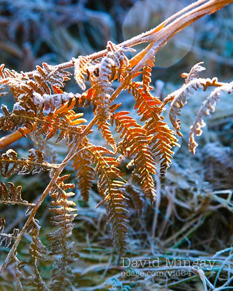 Jan 30: Frosty morning