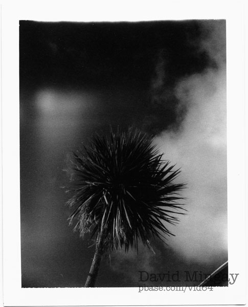 Polaroid palm with flare