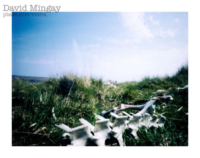 Apr 29: Worldwide Pinhole Photography Day