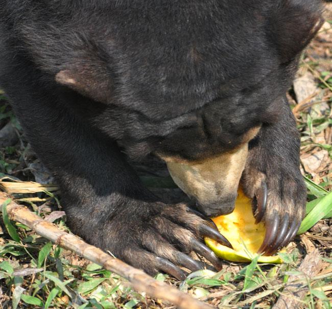 Small bear big claws