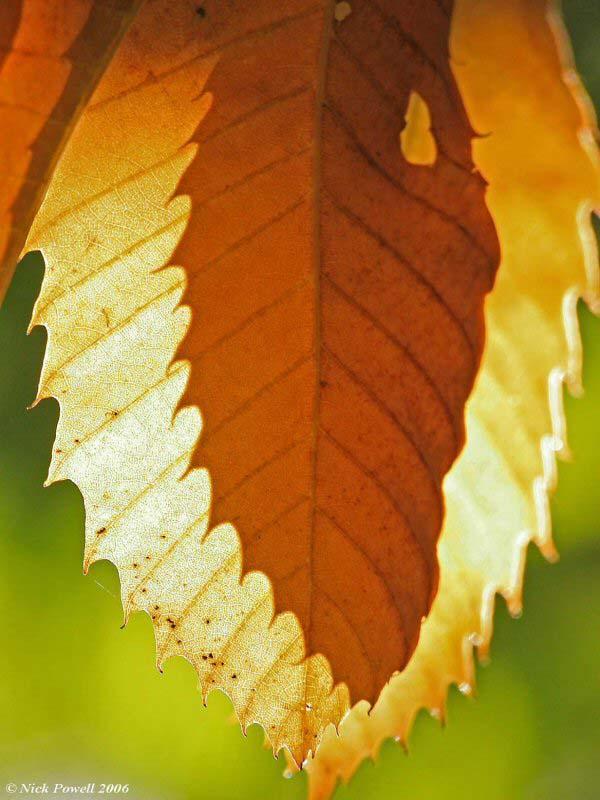 Autumnal colours 1