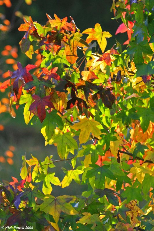 Autumnal colours 4.JPG