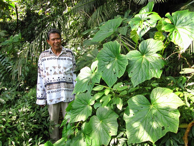 Badar with the Wild Begonia