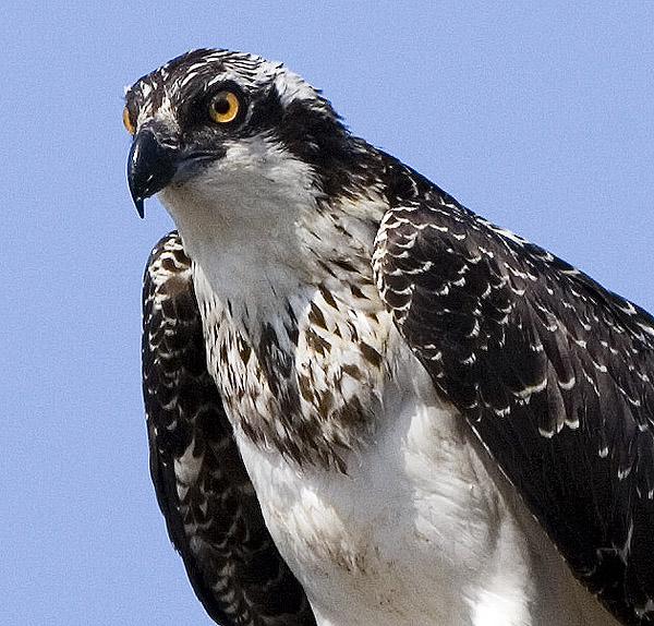 Osprey Looks