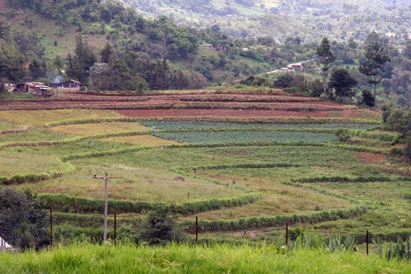 Cultivos en la Aldea Chipata Proxima a la Cabecera
