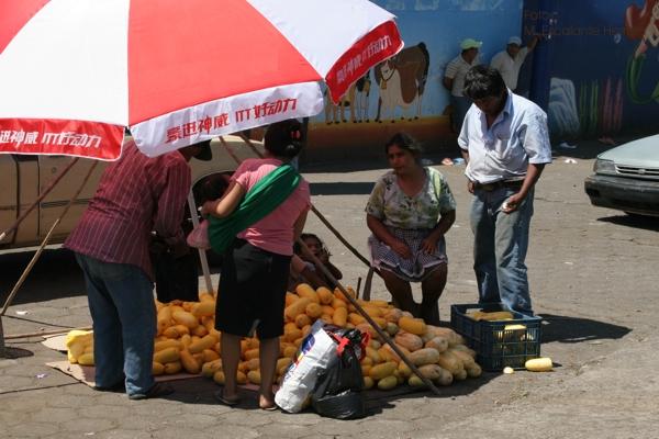 Venta de Pepino Dulce, Fruta Propia de la Region
