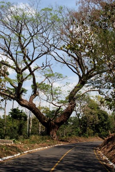Ruta Hacia el Sitio Arquologico Takalik Abaj