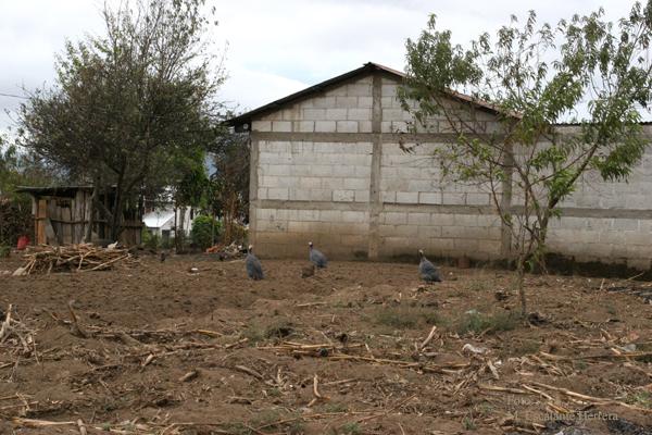 Terrenos Usados Para Cultivo en el Area Urbana