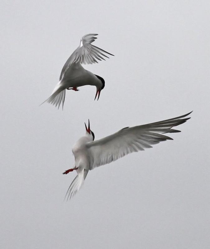 les iles_2012 05 22_0195--ballet aérien-800.jpg