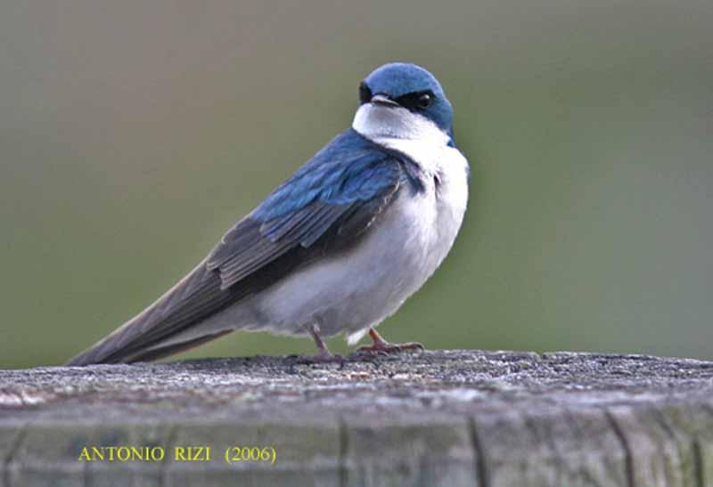 IMG_7427-hiron2- bleu-AR001.jpg