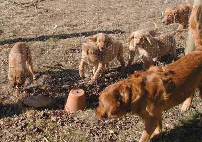 Puppy Picking