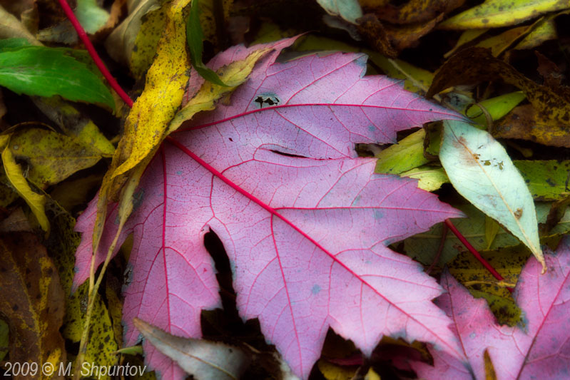 Autumn Leaves Fallen Leafs
