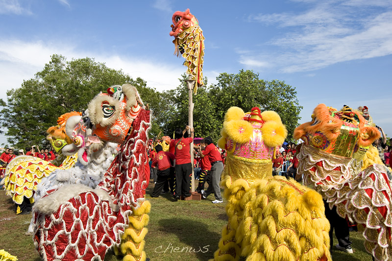 Lion dance performance  (8289)