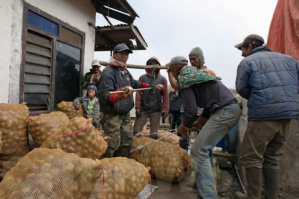 Potato traders