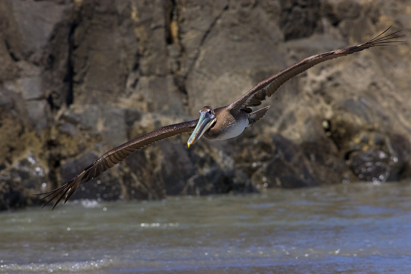 pelicano040208_4.jpg