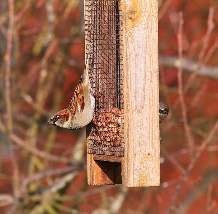 bird feeding .jpg
