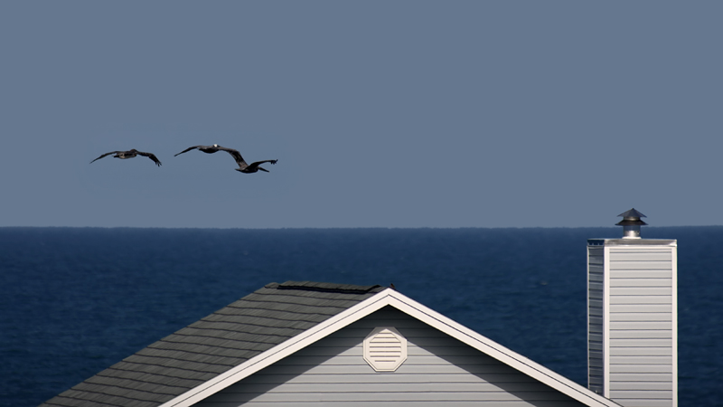 Rooftop and Pelicans
