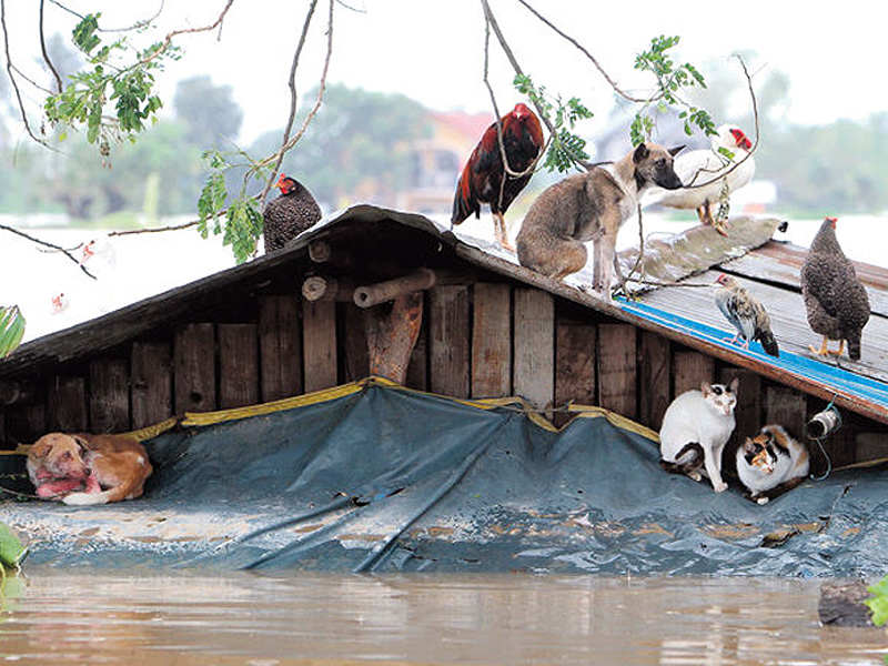 flood-rooftop-animals.jpg