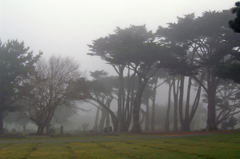 Pacific Grove Cemetary 08