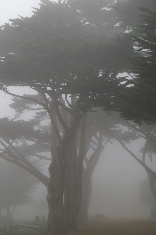 Pacific Grove Cemetary 10