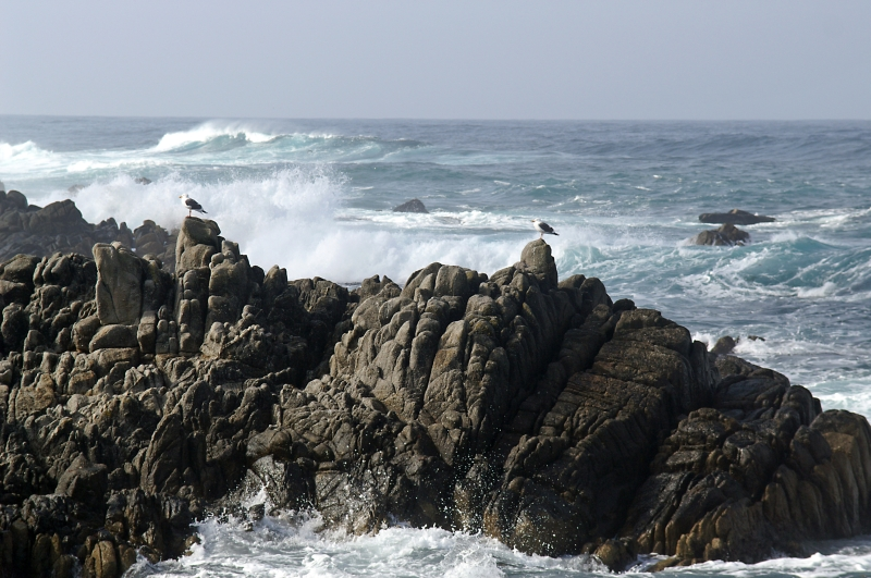 Pacific Grove/Asilomar 11