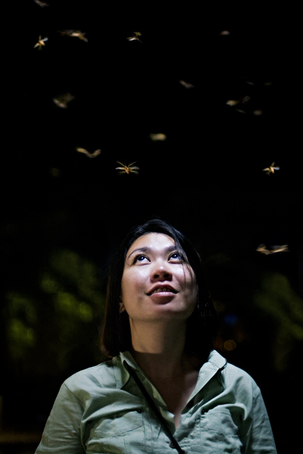 fong and the flies