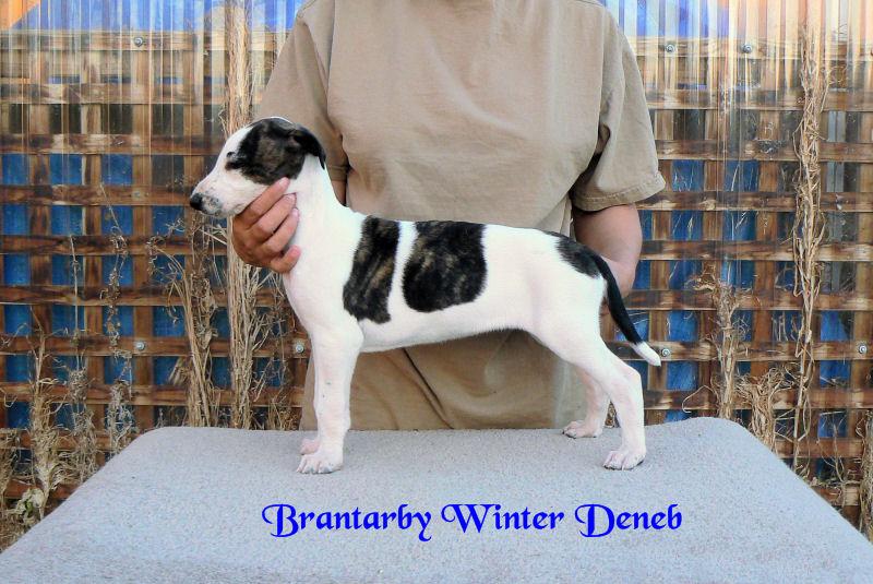 Brantarby Winter Deneb