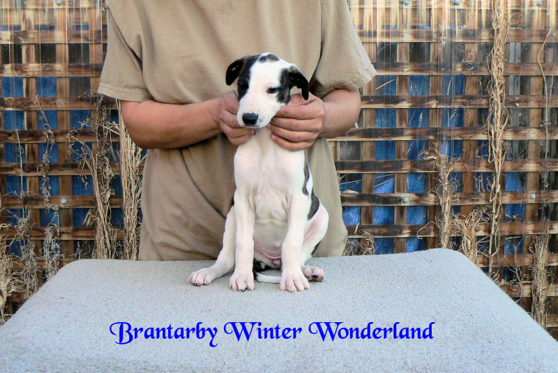 Brantarby Winter Wonderland