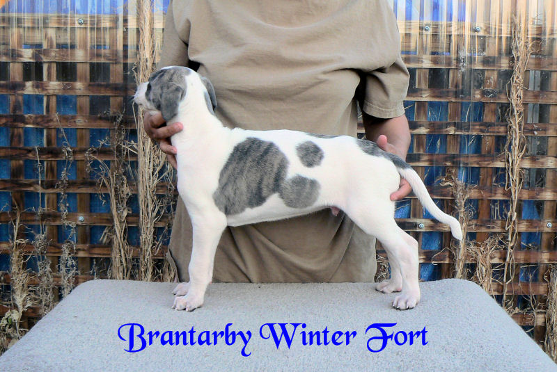 Brantarby Winter Fort