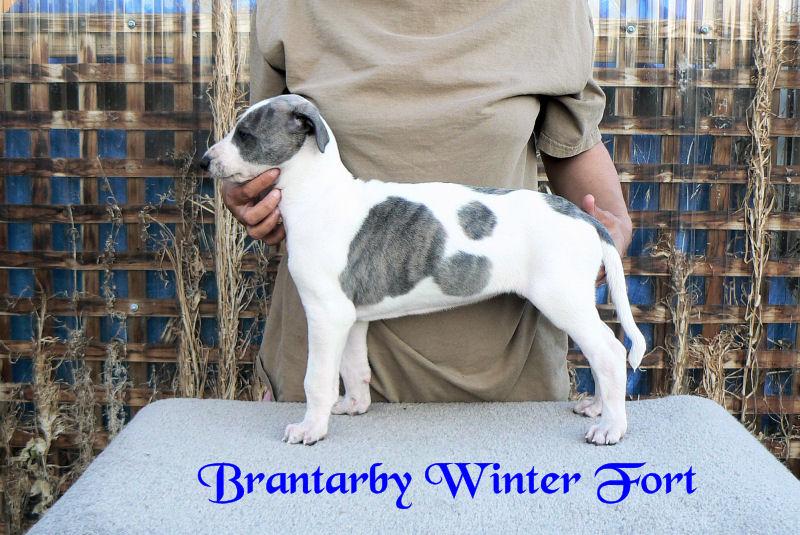 Brantarby Winter Fort