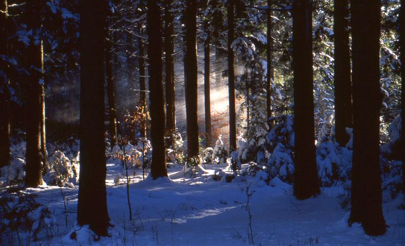 Winter at Summerhill