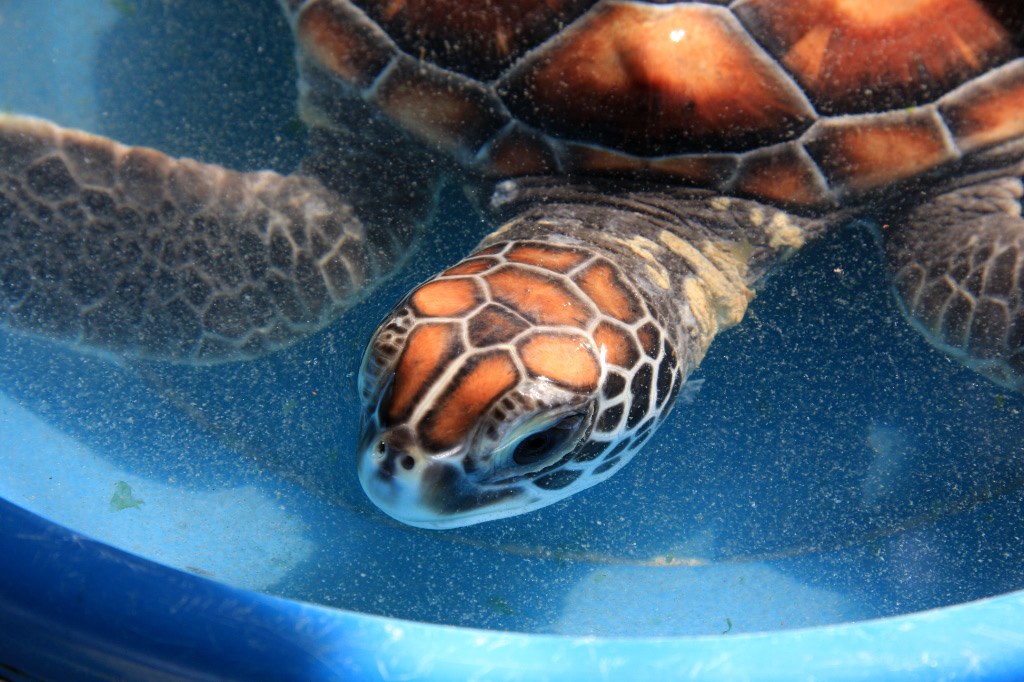 Turtle in pail