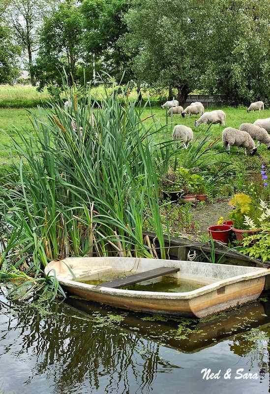 boat and sheep pasture