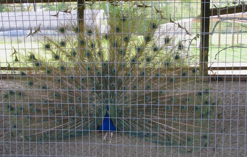 A Bird in a Non-Gilded Cage