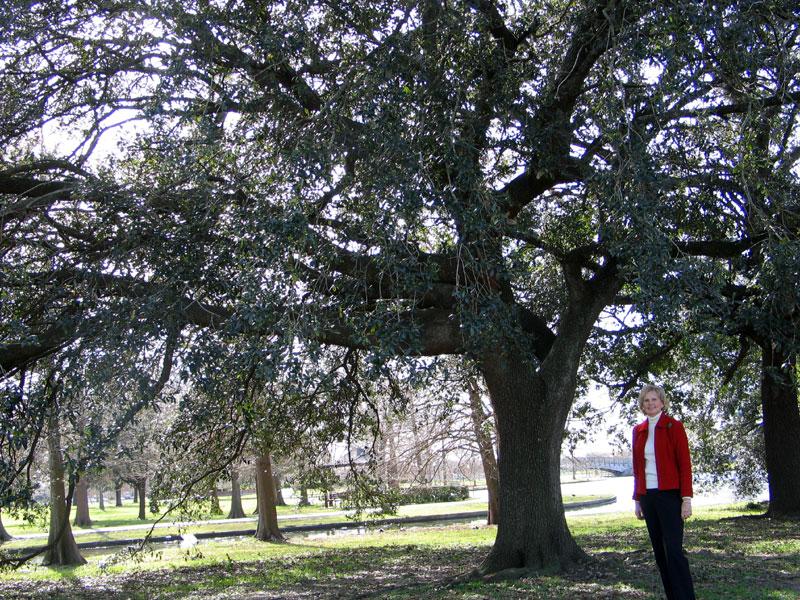 Lafrenieres First Registered Live Oak (Quercus virginiana)